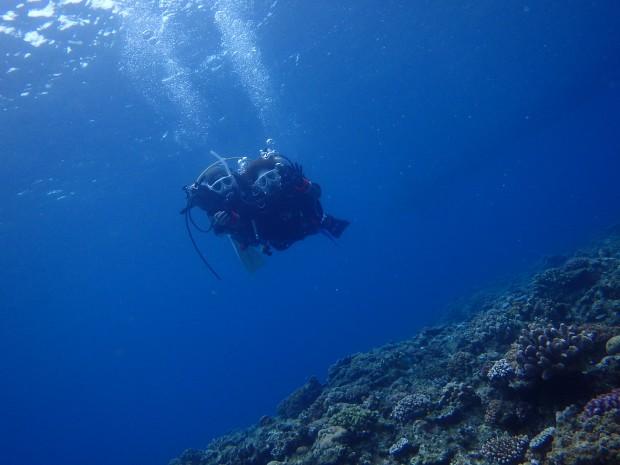 初めて!マンツーマンでご案内ダイバーの友達が付き添いウミガメ遭遇のイメージ