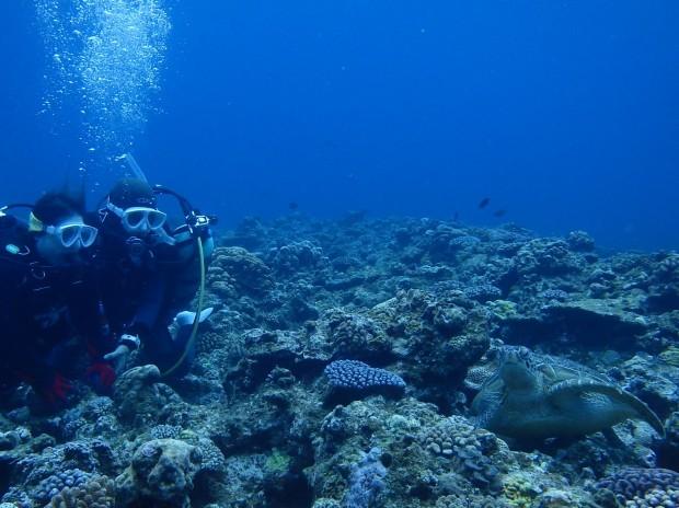 ウミガメに遭遇!チービシ諸島にある「ナガンヌ島」のポイントにて。のイメージ