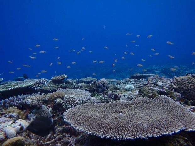 天気は雨でも、海が穏やかであれば、安全・快適な体験ダイビングが叶います。のイメージ
