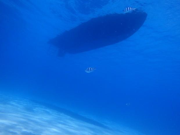 ウチナーンチュだからこそ!地元の海の魅力を体感職場メンバー誘い合わせて親子で体験ダイビングのイメージ
