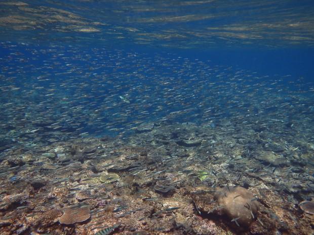 水面と小魚
