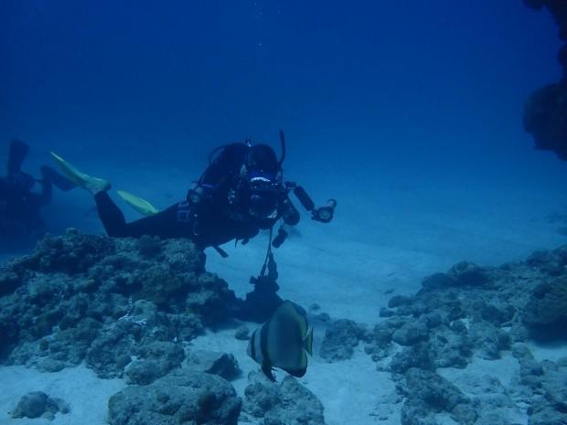 魚も!砂地も!サンゴも!