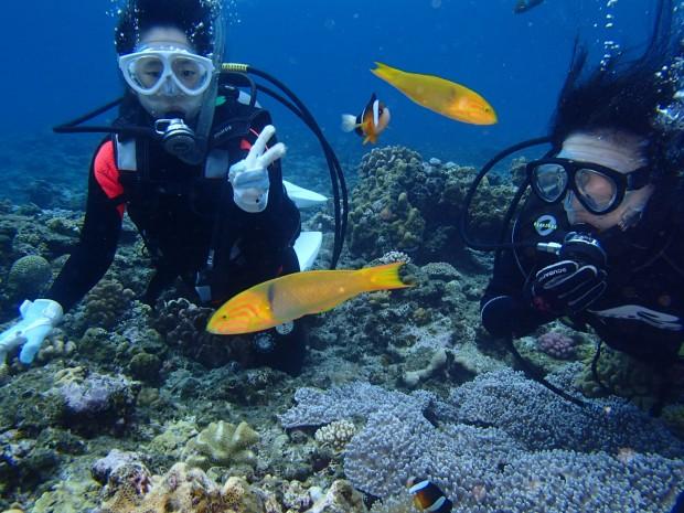 体験ダイバーと魚たち