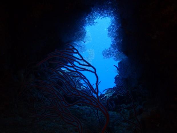 アカンマの水中風景