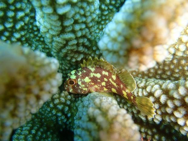 海の保全活動。チービシでレイシ貝駆除