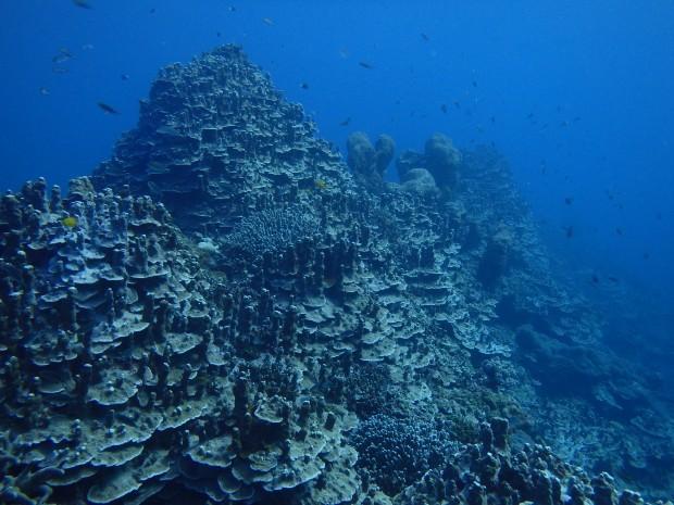 豊富なサンゴ