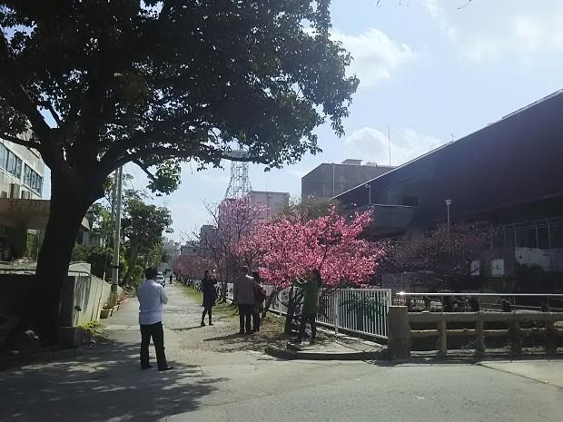 桜の木で記念撮影