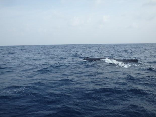 クジラの背中