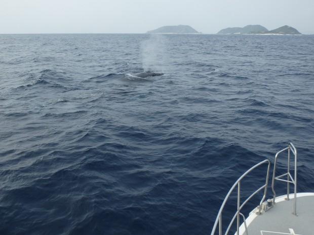 船の前にクジラ