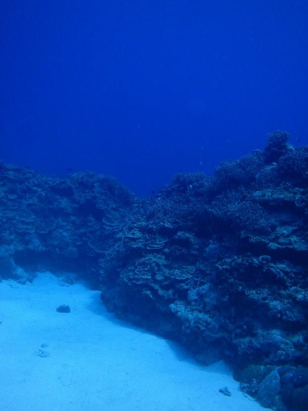 砂地とサンゴ