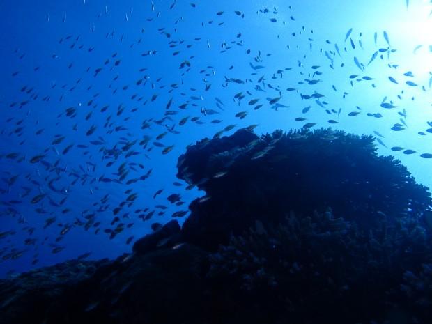 魚影と陽射し
