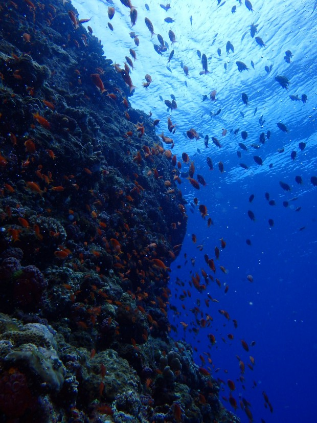 地形と魚影