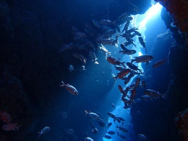 瀬底島と水納島を潜り歩き。日帰りで本島北部遠征!
