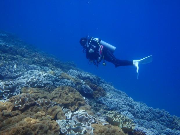 透明度30メートル!な海でマクロ。宜野湾発ボートダイビング