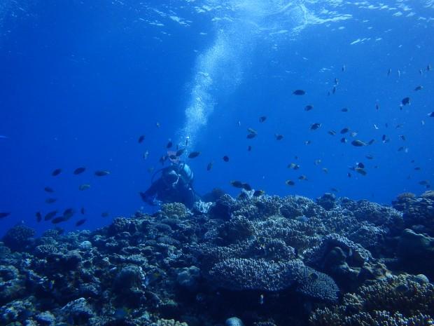 透明度最高!サンゴも豊富!宜野湾沖「クリフ」からスタート