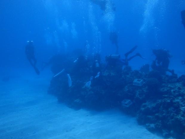サンゴの植え付けダイブ、チービシ・神山島で無事行いました!