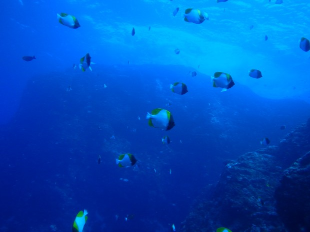 台風影響でウネリ強く。ケラマの海で3本オールドリフトダイブ