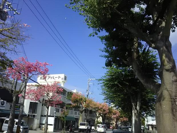 トックリキワタ並木
