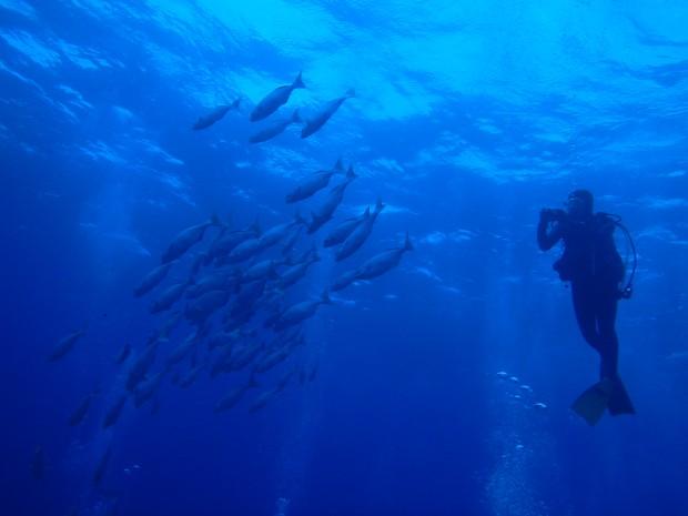 魚影とダイバー