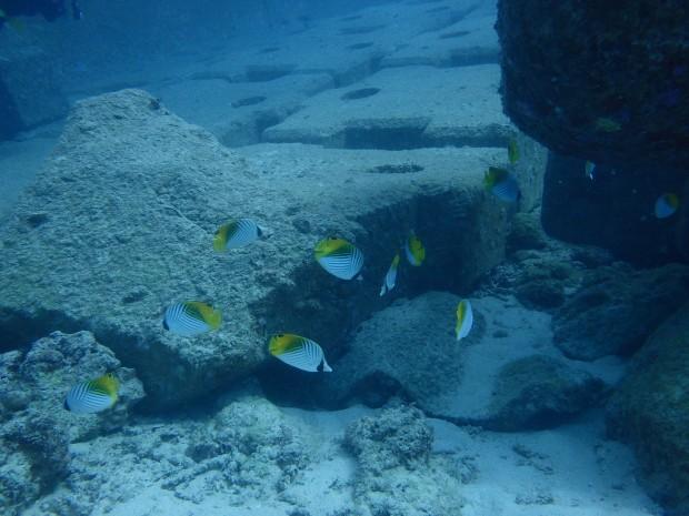 トゲチョウチョウウオの群れ!沖縄本島ビーチでクジラの声も♪