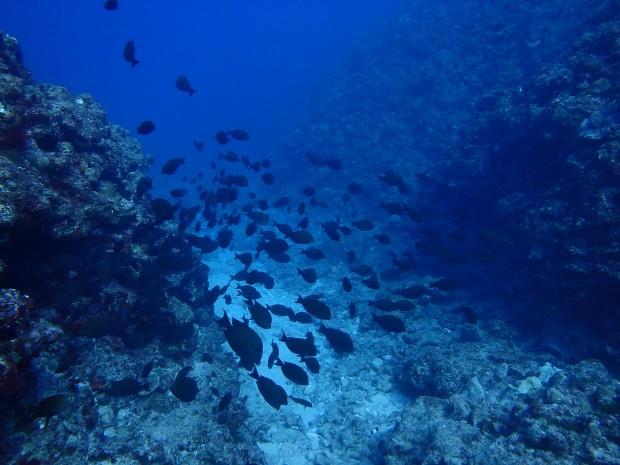 透明度と魚影