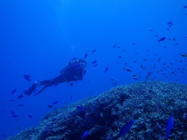 ハナゴイの群れとサンゴ群生!マンツーマンでケラマ・ダイビング