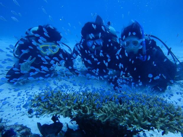 群れとサンゴとカメ!ブランクダイバー様、ケラマの海へご案内!