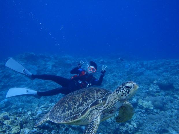 アオウミガメのパラダイスでカメ三昧のダイビング!日帰りケラマ