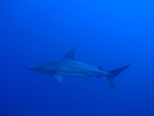 目の前にサメ