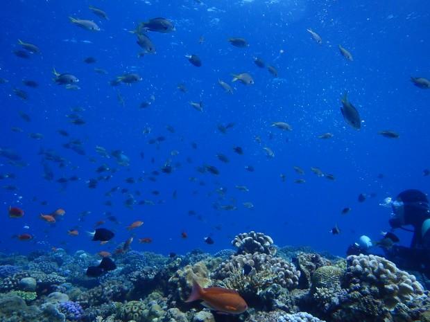 浅場の魚影