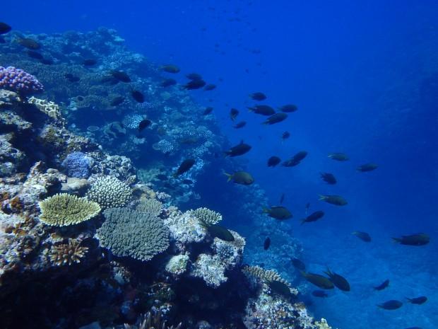 サンゴと透明度