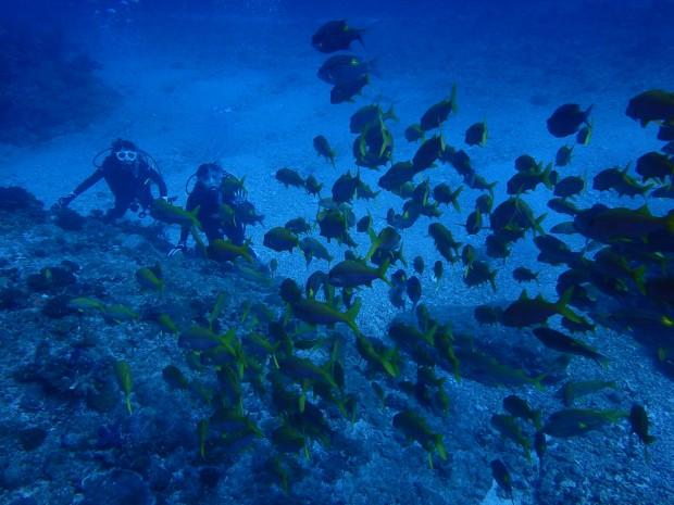 ウチザン礁でリアル美ら海水族館を体感!ケラマ・ボートダイビング
