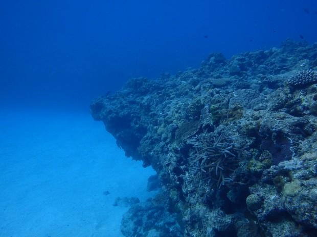 静かな水中