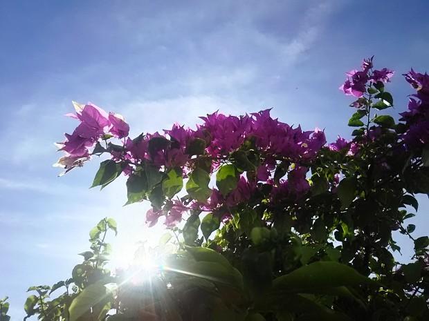 日中最高気温20度+陽射しパワーで、半袖Tシャツ日和!沖縄12月