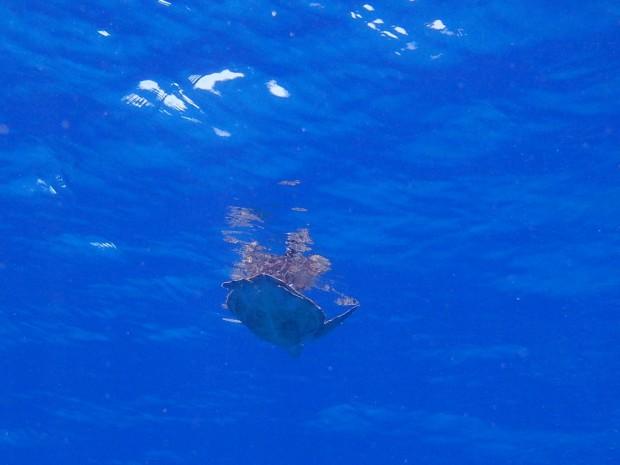 水面とカメ
