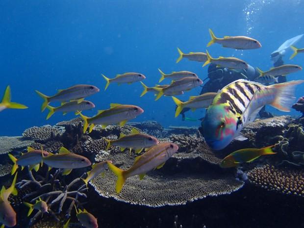 沖縄の海で潜り初め!2019元旦