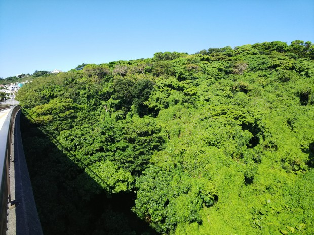 北風、大時化、気温急降下の沖縄。でも陽射し回復、緑が鮮やか!