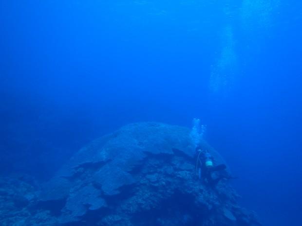 ハマサンゴとダイバー