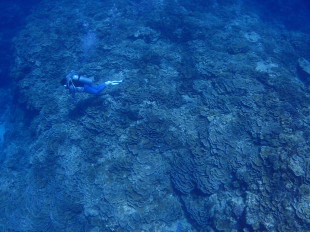 ダイバーとサンゴ