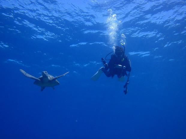 マンツーマンのケラマダイブ、カメと一緒にのんびり水中散歩!
