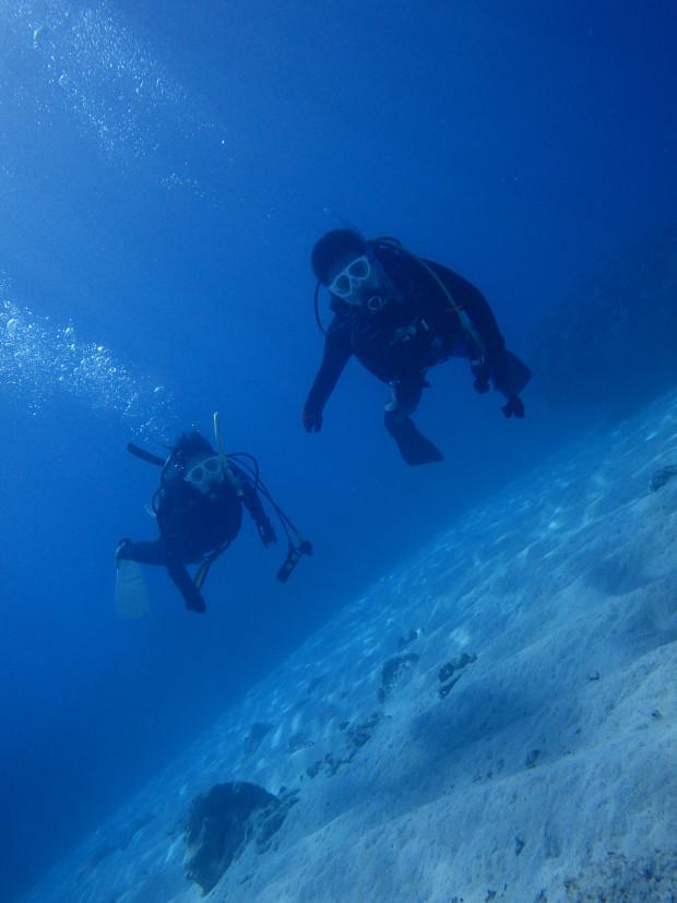 砂地を泳ぐ