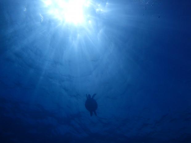最高だった連休沖縄ダイブ!が…台風24号の影響で今週は時化の海