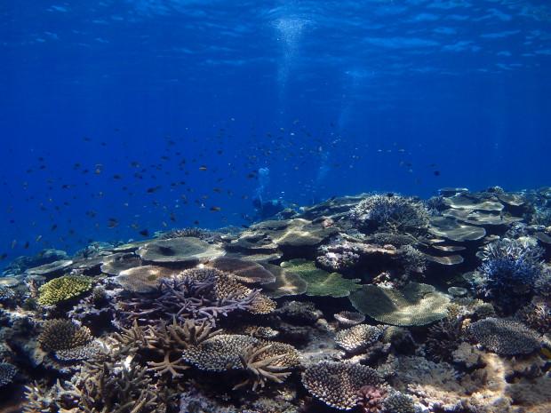 沖縄の美ら海保全活動に多くのご賛同をありがとうございます!
