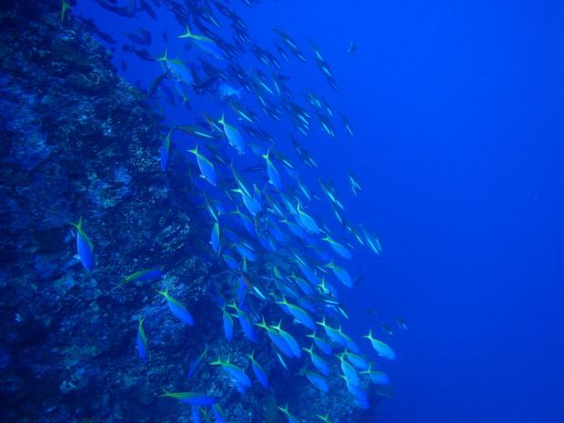 12月に夏のポイントエントリー!黒島北で地形と魚影満喫ダイブの思い出