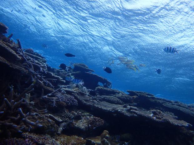 大時化のチービシ・ダイビング。でも水中は穏やか!水温24度!