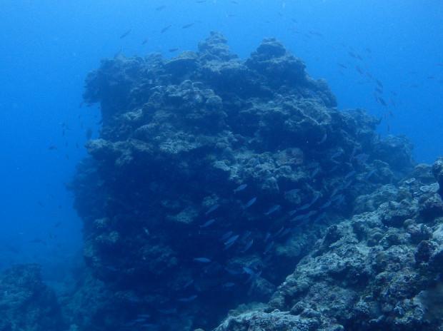 気付けばグルクンの群れの中!沖縄本島・南部海域3ボートダイブ