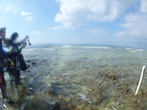 波打ち際でクジラの化石を観察!沖縄本島南部・岡波島沖ダイビング