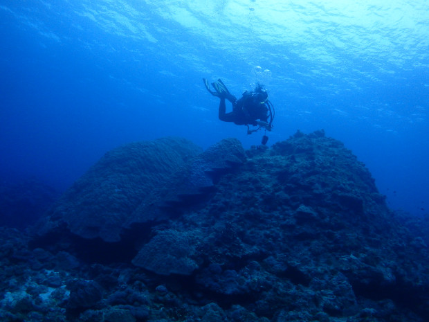 曇天・雨粒…でも水中は快適!チービシ・神山島でオオハマサンゴ