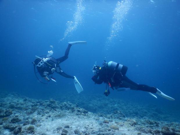 水中ツアー