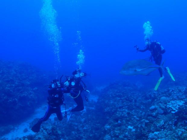 カスミアジ群れが目の前を!水温は28度台に上昇!ケラマ・黒島ダイブ